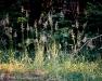 Sunlight Grass