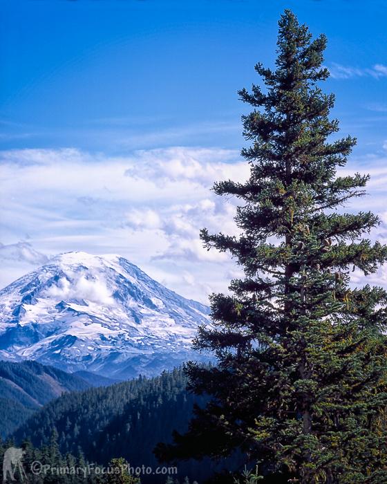 Mt Rainier East