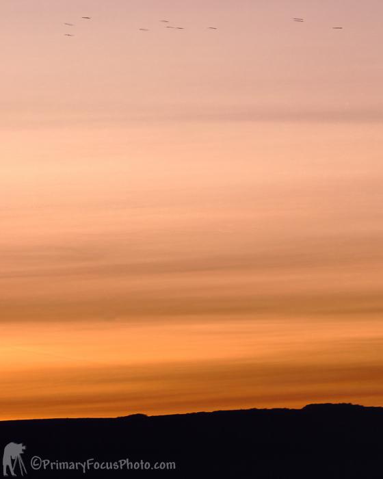 Sparrows Over Sun Set