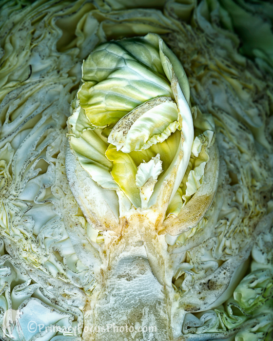 3046V_CABBAGE_JPEG_S