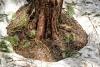 Posed Trees #24